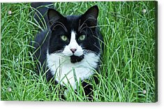 Black And White Cat With Green Eyes Acrylic Print
