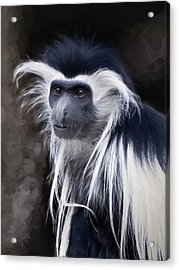 Black And White Colobus Monkey Acrylic Print by Penny Lisowski