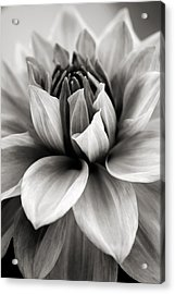 Black And White Dahlia Acrylic Print
