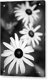 Acrylic Print featuring the photograph Black And White Daisies by Christina Rollo