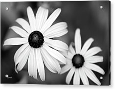 Acrylic Print featuring the photograph Black And White Daisy by Christina Rollo