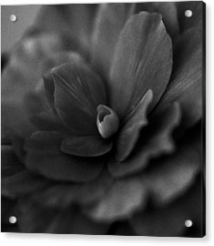 Acrylic Print featuring the photograph Black And White Flower Fifty by Kevin Blackburn