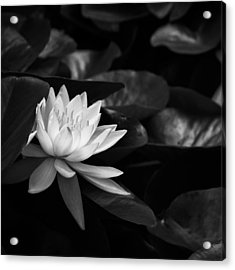 Acrylic Print featuring the photograph Black And White Flower Nine by Kevin Blackburn