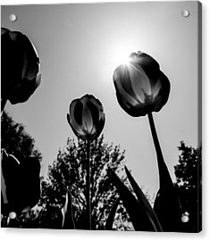 Acrylic Print featuring the photograph Black And White Flower Thirty One by Kevin Blackburn