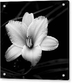 Acrylic Print featuring the photograph Black And White Flower Twenty by Kevin Blackburn