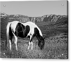 Black And White Horse Grazing In Wyoming In Black And White  Acrylic Print