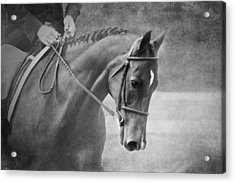 Black And White Horse Photography - Softly Acrylic Print by Michelle Wrighton