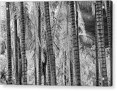 Black And White Infrared Palm Trees At The Huntington Library Acrylic Print by Randall Nyhof