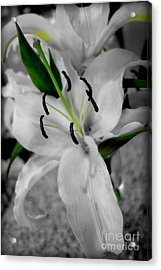 Black And White Life Acrylic Print by Kip Krause