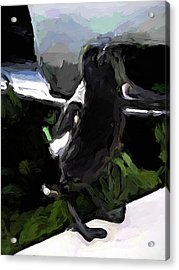Black And White Magpie On The Porch Acrylic Print