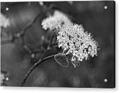 Black And White Acrylic Print