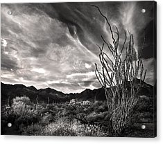 Black And White Ocotillo And Clouds Acrylic Print