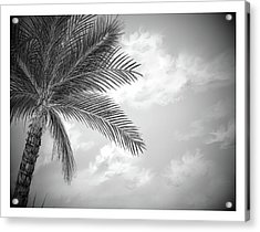 Acrylic Print featuring the digital art Black And White Palm by Darren Cannell