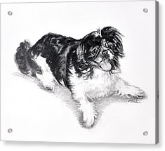 Black And White Pekingese Acrylic Print by Phyllis Tarlow