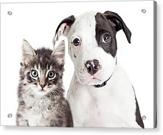 Black And White Puppy And Kitten Acrylic Print by Susan Schmitz
