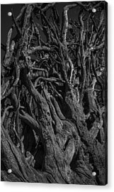 Black And White Roots Acrylic Print by Garry Gay