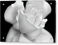 Acrylic Print featuring the photograph Black And White Rose Flower by Jennie Marie Schell