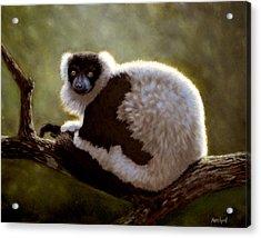 Black And White Ruffed Lemur Acrylic Print
