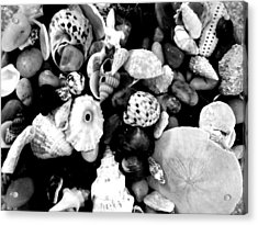 Black And White Seashells Acrylic Print by Kimberly Perry