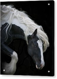 Black And White Study V Acrylic Print by Terry Kirkland Cook
