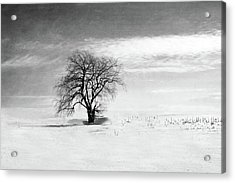 Black And White Tree In Winter Acrylic Print