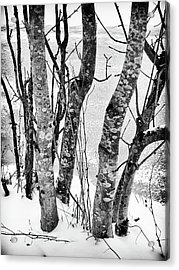 Black And White Trees Acrylic Print