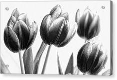 Black And White Tulips Acrylic Print