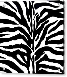 Black And White Zebra  Acrylic Print