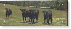 Black Angus Buddies Acrylic Print by Terri  Meyer