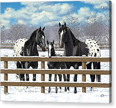Black Appaloosa Horses In Snow Acrylic Print by Crista Forest