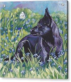 Black Australian Kelpie Acrylic Print by Lee Ann Shepard