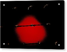 Black Barbed Wire Over Black And Blood Red Background Eery Imprisonment Scene Acrylic Print