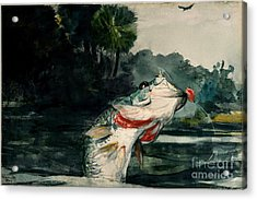 Black Bass Acrylic Print by Pg Reproductions