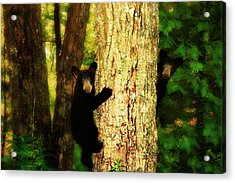 Black Bear Cubs Acrylic Print by Gray  Artus