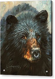Acrylic Print featuring the painting Black Bear by David Stribbling