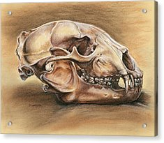 Black Bear Skull Acrylic Print