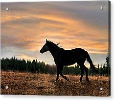 Black Beauty At Sunset Acrylic Print