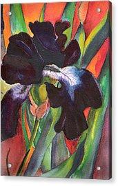 Black Beauty Acrylic Print