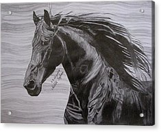 Black Beauty Acrylic Print by Melita Safran