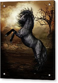 Black Beauty Acrylic Print by Shanina Conway