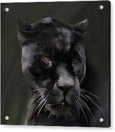 Black Beauty Acrylic Print by Vic Weiford