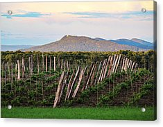 Black Birch Vineyard And Summit House View Acrylic Print
