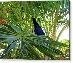 Acrylic Print featuring the photograph Black Bird And Green Leaf by Francesca Mackenney