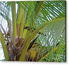 Acrylic Print featuring the photograph Black Bird In Tree by Francesca Mackenney