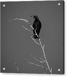 Black Bird On A Branch Acrylic Print