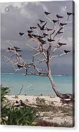Acrylic Print featuring the photograph Black Birds by Mary-Lee Sanders