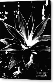 Black Cactus  Acrylic Print by Rebecca Harman