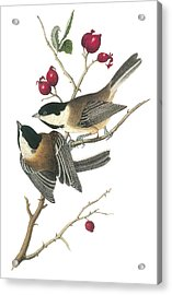 Black-capped Chickadee Acrylic Print by John James Audubon