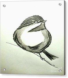 Black Capped Chickadee  Acrylic Print