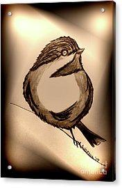 Black Capped Chickadee - Songbird In The Spotlight  Acrylic Print